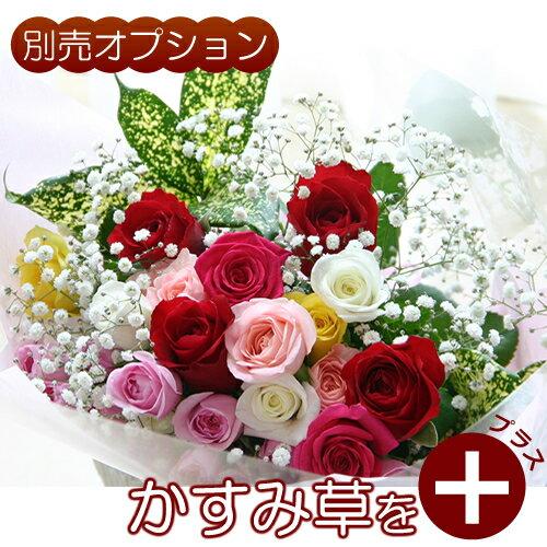 生花ギフト用オプションかすみ草(霞草/かすみそう/カスミソウ)花束やアレンジメントの添え花に白いカス