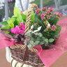 花鉢 ギフト 寄せ鉢 プリティーミックス