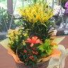 花鉢 ギフト 送料無料 可愛い寄せ鉢ミックス
