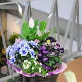 そのとき入荷の花鉢や観葉植物等をデザインミックスして、カゴ等にアレンジしてお届けいたしま...