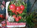 【クラブアップル・ゴージャス】(5号)ハナリンゴ・果樹・姫リンゴ