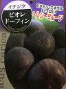 【イチジク ビオレ ドーフィン】5号ポット・ヘルシー果樹