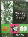 【スレンダーコンパクトアップル・タスカン】(5号)リンゴ・果樹・カラムナー(円筒形)タイプ