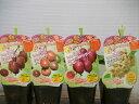 【ベビーキウイ苗4種類4ポットセット】3号ポット・つる性落葉樹・果樹苗