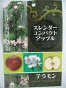 【スレンダーコンパクトアップル・テラモン】(5号)リンゴ・果樹・カラムナー(円筒形)タイプ
