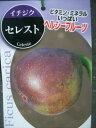 【イチジク セレスト】5号ポット・ヘルシー果樹