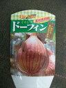 【イチジク ドーフィン】4号ポット・ヘルシー果樹