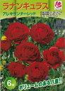 ラナンキュラスアレキサンダーレッド 6球【秋植え球根】花の大和