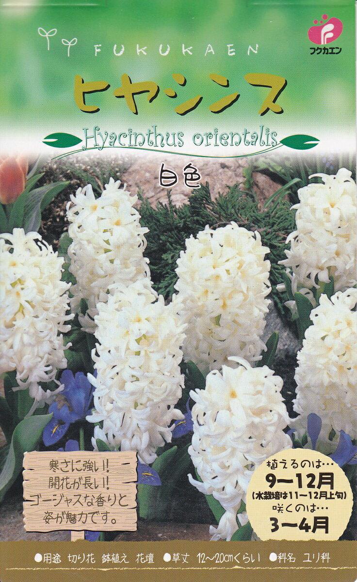ヒヤシンス白色3球秋植え球根