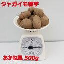 あかね風 種芋【種イモ用】500g(充填時)