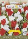 【秋植え球根】ミニお花畑 にぎやか20球入り タキイ種苗