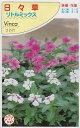 ニチニチソウ 夏の花壇 混色花壇 鉢植え 春蒔き種子 フクカエン