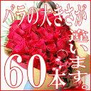 還暦祝いの女性にプレゼント 還暦祝い母の誕生日にバラ花束60本
