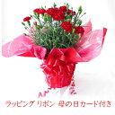 母の日 花 ギフト カネーション 母の日鉢植え 母の日プレゼント