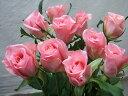 バラ ピンク ロサクオーツ 1本150円30cm静岡県産10本売単の販売です「個数」の記入例。「10」「20」「30」お支払いは代引きのみです発送は本日か明日【配達日の指定はできません】【バイキングの花】