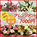 【花】フラワーコンシェルジュが厳選した花屋のお祝いアレンジメント花 7000円 【あす楽対応】【楽ギ