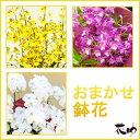 【鉢花】フラワーコンシェルジュが厳選した花屋の季節の鉢花 送...