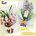 【鉢花】フラワーコンシェルジュが厳選した花屋の季節の花鉢 送...