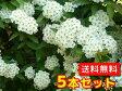 コデマリ 樹高0.4m前後 15cmポット 5本セット 【送料無料】 / /