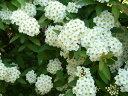 一覧イメージ - 花と緑