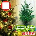 モミノキ / 樹高1.2m前後 根巻き 【送料無料】 もみの木 もみのきモミの木