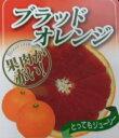 ブラッドオレンジ 【8本セット】 樹高0.6m前後 15cmポット 【送料無料】 オレンジ /