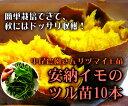サツマイモ 苗 販売【安納芋の苗(イモヅル)10本】 トロ〜...