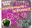 超新鮮!収穫して2営業日内に出荷。【紫イモ 苗(イモヅル)10本】(※メール便不可※)お菓子作りに最適な、アントシアニンたっぷりの紫サツマイモの苗を栽培しよう!(さつまいも・苗・イモヅル・苗 家庭菜園