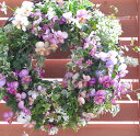 成長するフラワーリース パンジー&ビオラの寄せ植え「ピンクア...