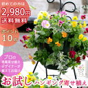 ハンギングバスケットの寄せ植え「お試しパンジー・ビオラ版」 初めてのお客様限定/開花期:今から春まで