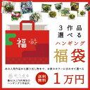3作品選べる「ハンギング寄せ植え福袋2018」開花期:今から...
