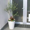【送料無料】「オリーブ × 季節の花 寄せ植え 選べる陶器鉢 白 (高さ130cm前後)」大型 オリーブの木 寄せ植え 鉢植え 開店祝い 法人ギフト 店舗 メインツリー