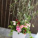 【送料無料】「オリーブの木 〜季節の花を寄せ植え(高さ100cm〜130cm前後・個体差あり)」(オリーブ 鉢植え 開店祝い 店舗 メインツリー シンボルツリー 寄せ植え 玄関先 おしゃれ フラワー ギフト ガーデニング セット 贈り物 鉢 誕生日 ギフト 新築祝いなどに)
