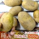 【じゃがいも 種芋 種イモ】 「ピルカ 500g」北海道産 【苗】【種】【ばれいしょ】【ジャガイモ】【家庭菜園】【苗】