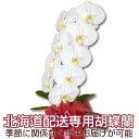こちらの商品は季節に関係なく、年中北海道への配送が可能です。※離島は(利尻、礼文、天売、焼尻、奥尻)はお届け出来ません。