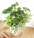 【品質保証★花】【メッセージカード無料】【観葉植物】グリーン寄せ植え〜ブリーズ