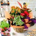 14時までの受付であす楽対応 季節のおまかせ花鉢とグリーンの...