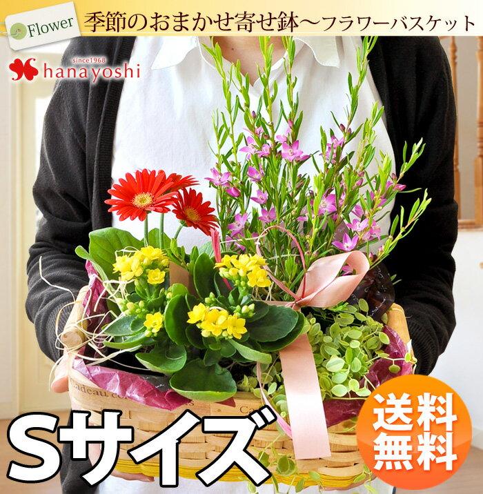 あす楽対応季節のおまかせ花鉢とグリーンの寄せ入れSサイズフラワーバスケット鉢花誕生日プレゼント女性母