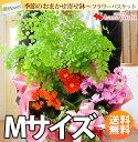 ■年始は1月11日以降お届け■送料無料 花鉢 ギフト 季節のおまかせ花鉢とグリーンの寄せ入れMサイズ