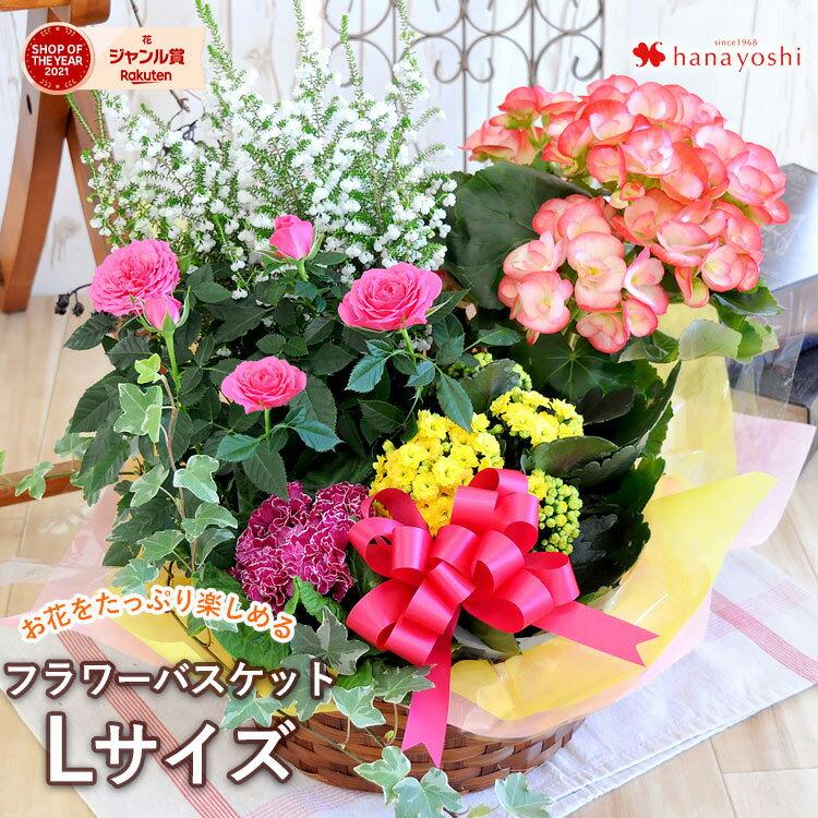 季節のおまかせ花鉢とグリーンの寄せ入れLサイズ◎フラワーバスケット即日発送花鉢植えギフトおしゃれ誕生