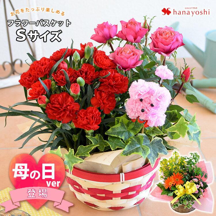 季節のおまかせ花鉢とグリーンの寄せ入れSサイズフラワーバスケット母の日鉢花鉢植えギフトおしゃれ花誕生