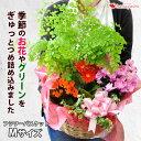 季節のおまかせ花鉢とグリーンの寄せ入れMサイズ フラワーバス...