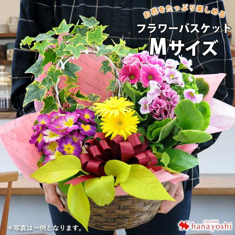 季節のおまかせ花鉢とグリーンの寄せ入れMサイズフラワーバスケット鉢植えフラワーギフトお誕生日お花誕生