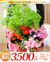 [free shipping] hotchpotch case 3,500 yen [flower basket] of the flower bowl entrusting you of the season [potted plant] [flower bowl] [easy  _ Messe input] [easy  _ packing] [image service image delivery] [tomorrow easy correspondence] a midyear gift [HLS_DU] [2sp_121122_yellow] [RCP] [SS10P03mar13]