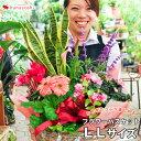 送料無料 季節のおまかせ花鉢とグリーンの寄せ入れ LLサイズ...
