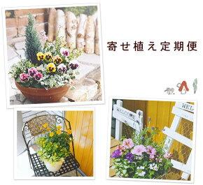 【6回コース】お花に囲まれる幸せ♪寄せ植えの会Let's 気軽に楽しくガーデニング☆【寄せ植えキット サブスク 花 頒布会】