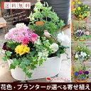 送料無料 寄せ植え ギフト 花色とプランターが選べる 季節の...