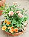 【寄せ植え】季節のおまかせ¥3.000〜イメージ選べるオーダーメイド、今一番新鮮できれいなお花...