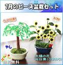 盆栽 ミニ 毎月おすすめビーズ盆栽セット 送料無料!! 山久オリジナル 手芸の山久 P01Jul16