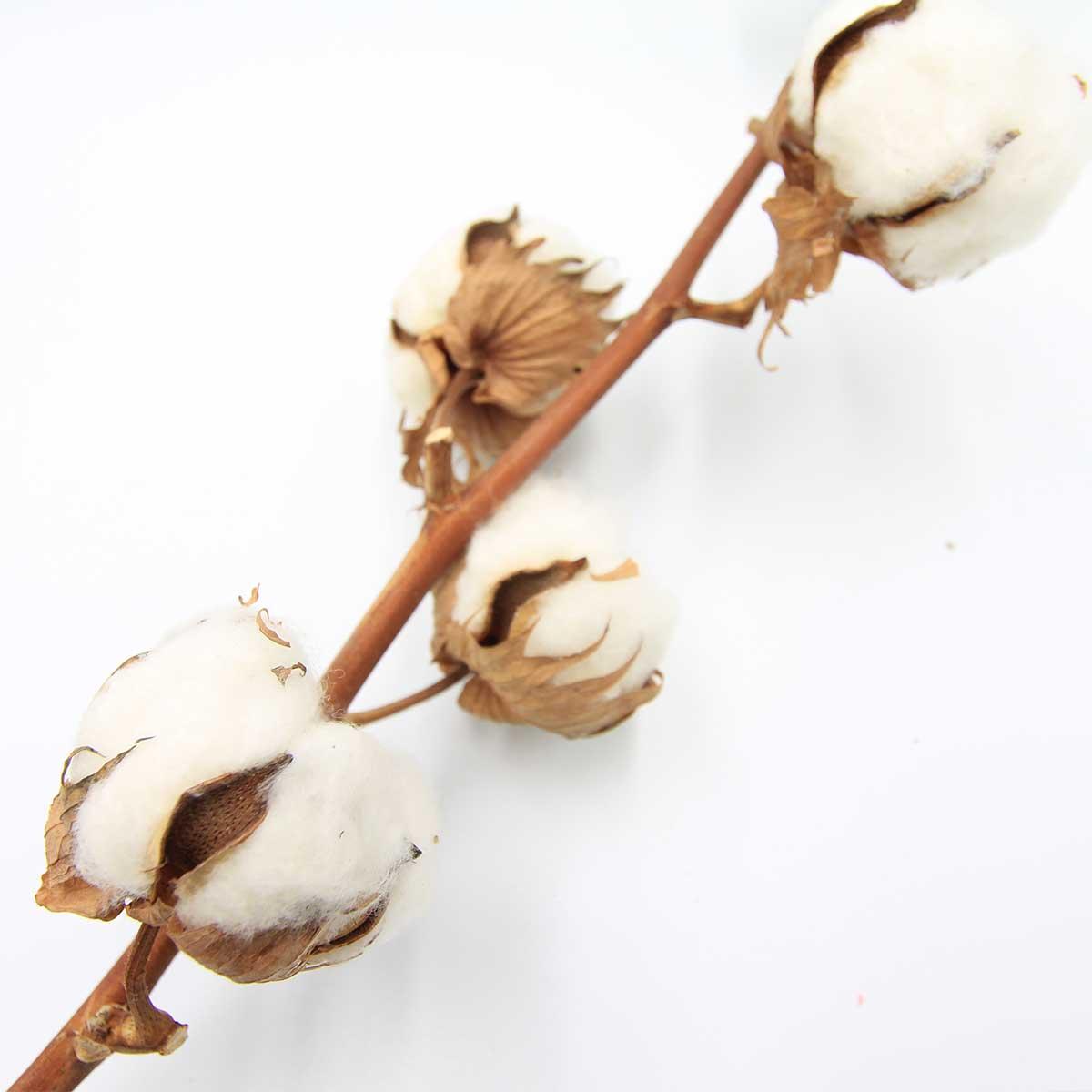 コットンフラワー 装飾 飾り付け リース スワッグ ナチュラルホワイト 綿の木 ワタ 1本 5ヘッド付き インテリア ハンドメイド